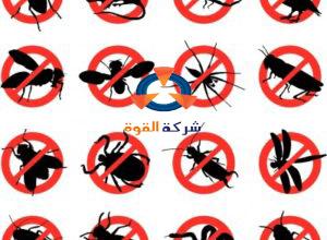 Photo of شركة مكافحة حشرات بالاحساء 0532478842