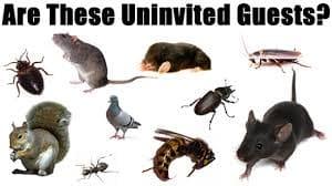 شركه مكافحة حشرات بالا