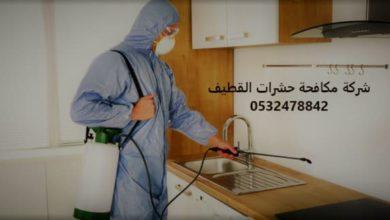 Photo of شركة مكافحة حشرات القطيف