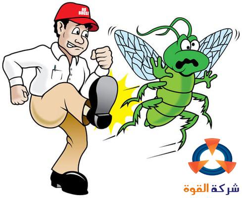 شركة مكافحة حشرات القطيف