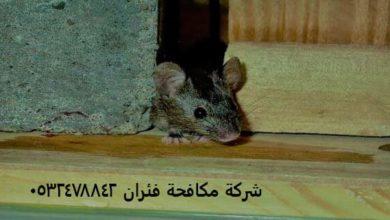 Photo of شركة مكافحة فئران بالدمام – القضاء علي الفئران 0532478842