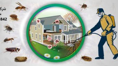 Photo of شركة مكافحة حشرات بالخبر | لرش الحشرات اتصل 0532478842