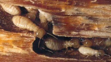 Photo of طريقة مكافحة النمل الابيض في المنزل