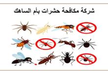 Photo of شركة مكافحة حشرات بأم الساهك