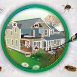 شركة مكافحة حشرات بالجبيل - شركة مكافحة الحشرات بالجبيل