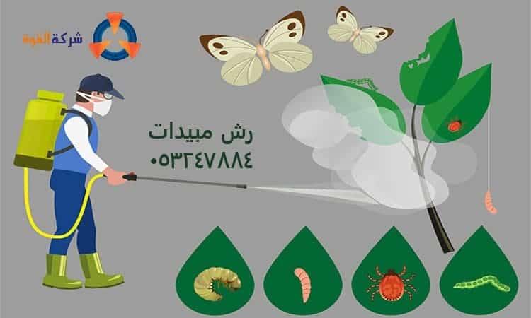 شركة رش مبيدات بالقطيف