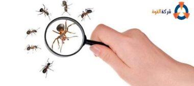 شركة مكافحة النمل الابيض ببقيق