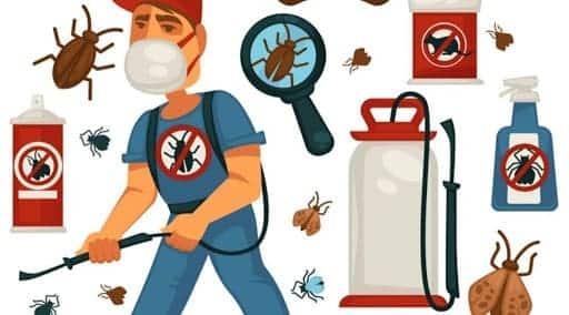 شركة مكافحة حشرات منزلية بالدمام