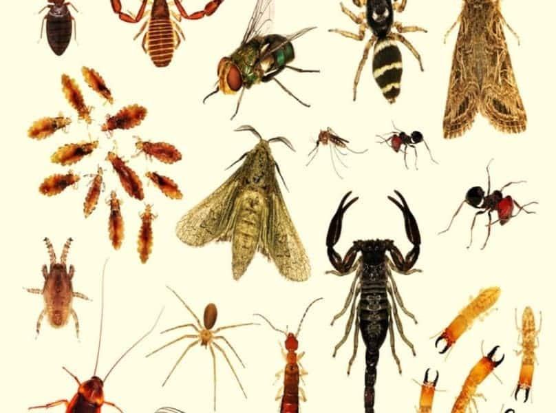أنواع الحشرات بالصور والأسماء